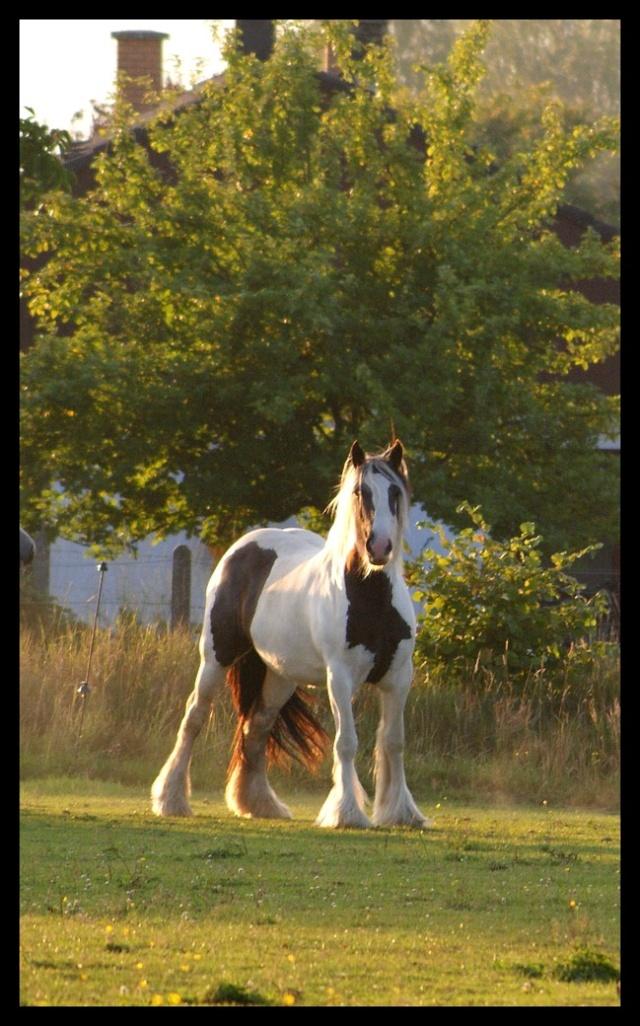 Pleins de nouvelles de mes chevaux, que de changements Chevau22