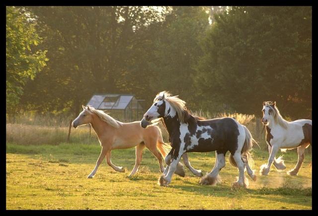 Pleins de nouvelles de mes chevaux, que de changements Chevau24