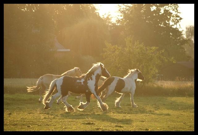Pleins de nouvelles de mes chevaux, que de changements Chevau25