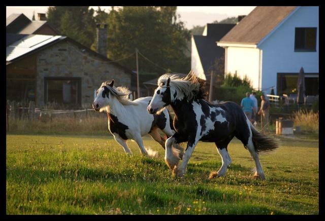 Pleins de nouvelles de mes chevaux, que de changements Chevau26