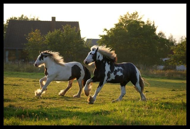 Pleins de nouvelles de mes chevaux, que de changements Chevau27