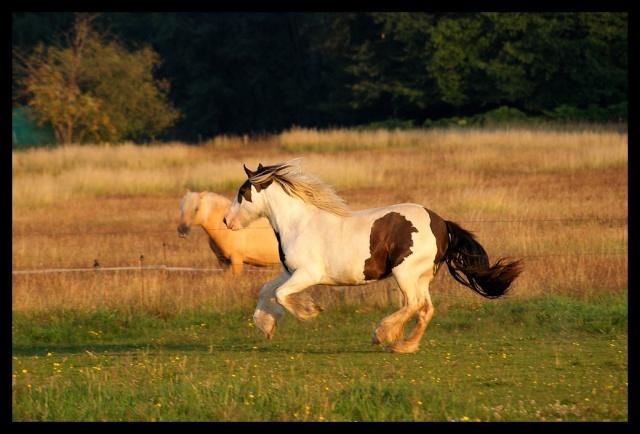 Pleins de nouvelles de mes chevaux, que de changements Chevau28