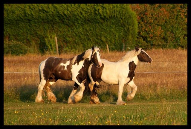 Pleins de nouvelles de mes chevaux, que de changements Chevau29