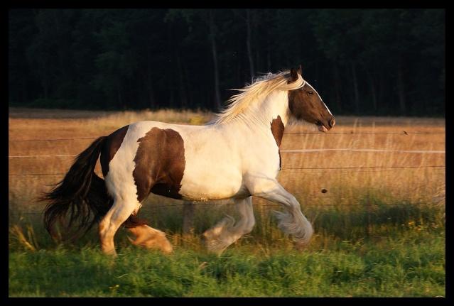 Pleins de nouvelles de mes chevaux, que de changements Chevau30
