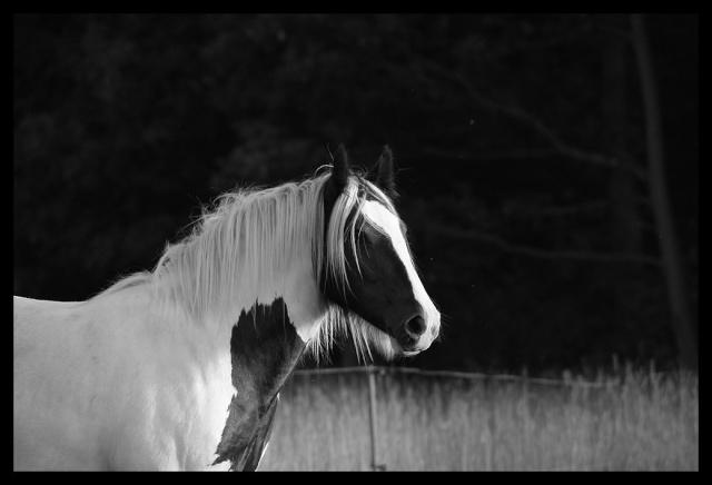 Pleins de nouvelles de mes chevaux, que de changements Chevau31