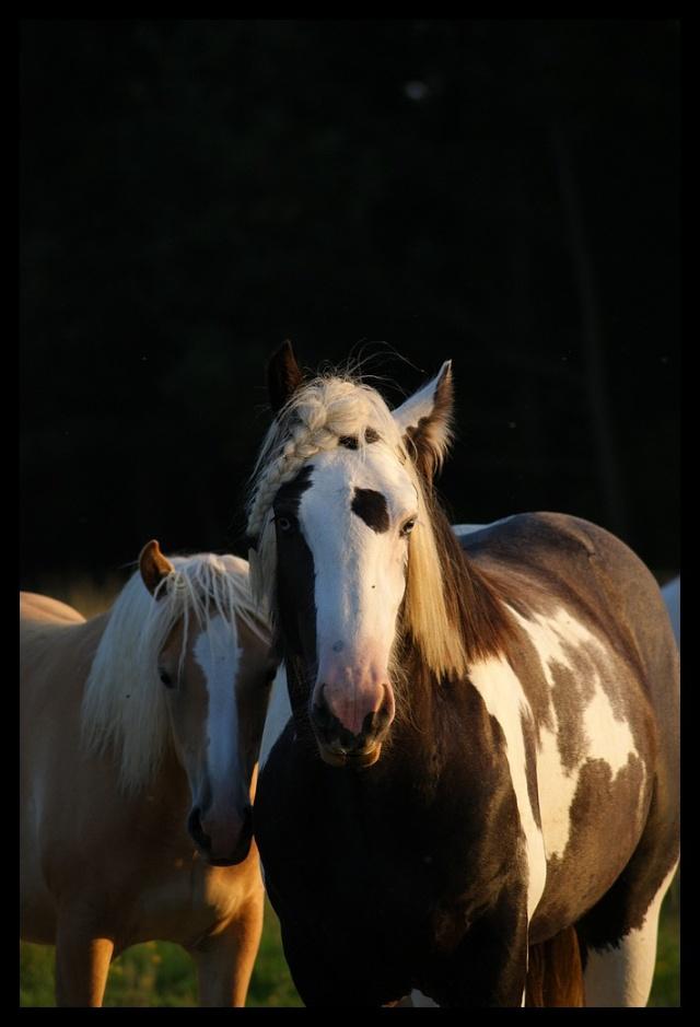 Pleins de nouvelles de mes chevaux, que de changements Chevau32