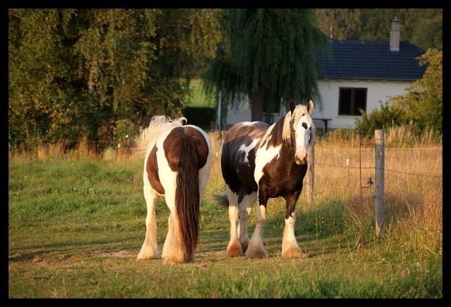 Pleins de nouvelles de mes chevaux, que de changements Chevau33