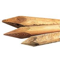 Aménagement idéale prairies avec étalon, poulains et juments P_509510