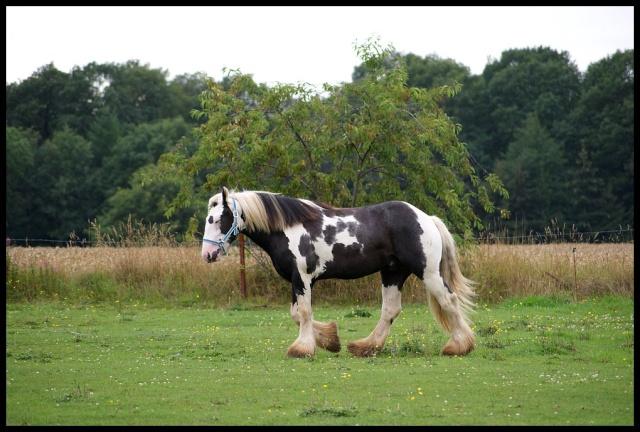 Pleins de nouvelles de mes chevaux, que de changements Retour10