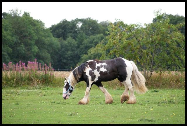 Pleins de nouvelles de mes chevaux, que de changements Retour11