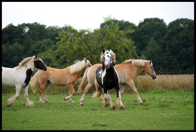 Pleins de nouvelles de mes chevaux, que de changements Retour12