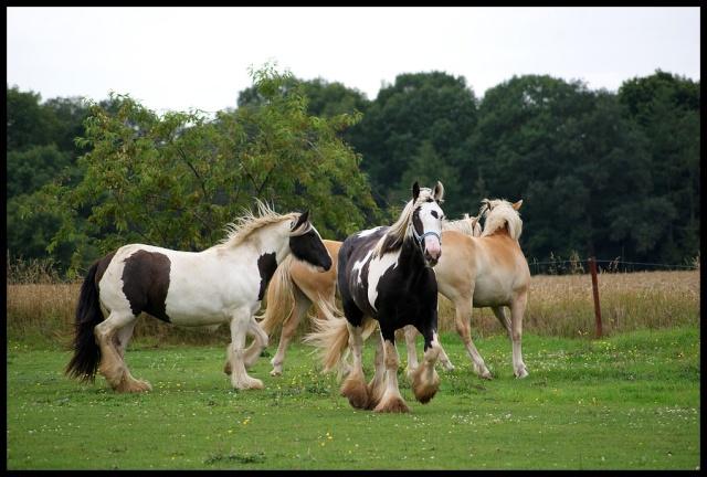 Pleins de nouvelles de mes chevaux, que de changements Retour13