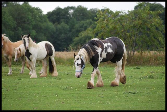 Pleins de nouvelles de mes chevaux, que de changements Retour14