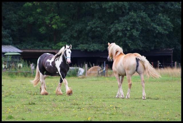 Pleins de nouvelles de mes chevaux, que de changements Retour15