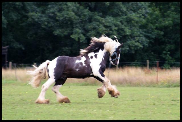 Pleins de nouvelles de mes chevaux, que de changements Retour17