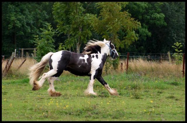 Pleins de nouvelles de mes chevaux, que de changements Retour18