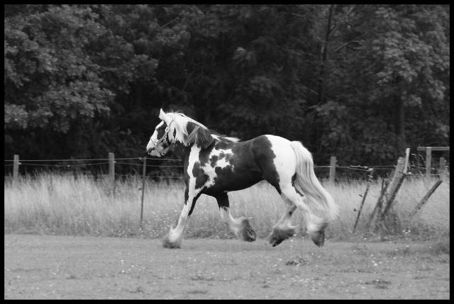 Pleins de nouvelles de mes chevaux, que de changements Retour19