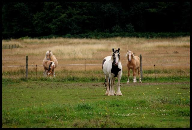 Pleins de nouvelles de mes chevaux, que de changements Retour20