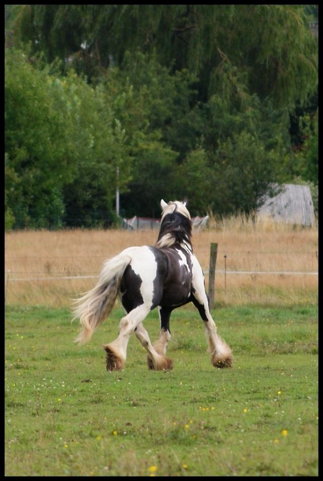 Pleins de nouvelles de mes chevaux, que de changements Retour21