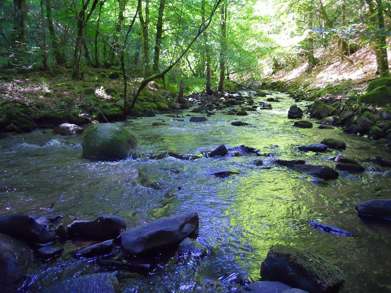 Cascade de la Ribeyrette (Riom-ès-Montagnes) Dscn0158