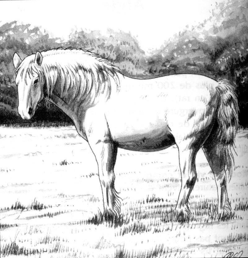 Bestiaire de Tanaephis : Le Cheval Cheval10