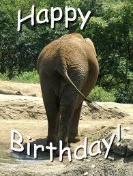 Happy Birthday, Carol. Elepha10