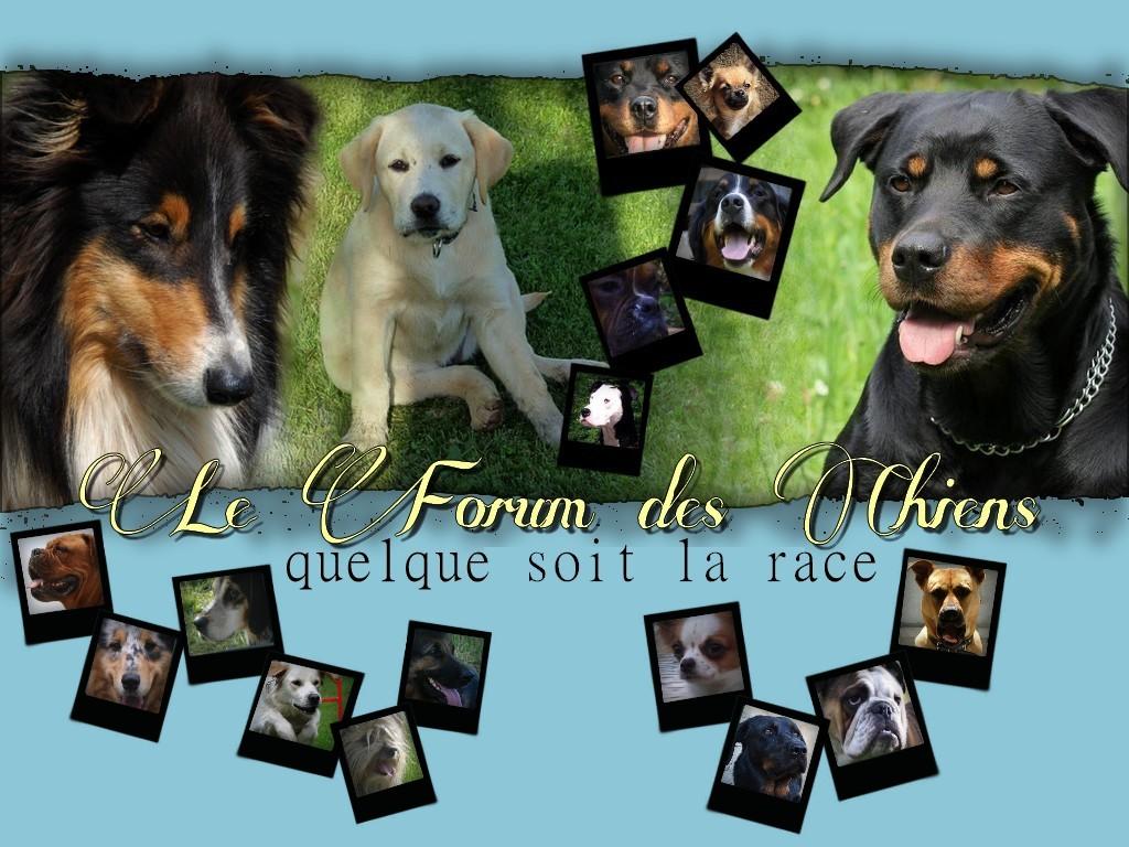 Forum des passionnés de chiens quelque soit la race