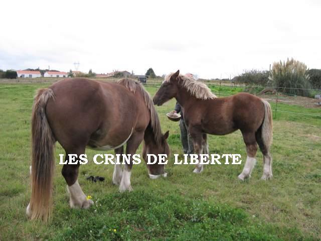 URANAS DES CHESNEAUX, trait Breton, reservé par Rebecca !!!! (2008) ANGLETERRE - Page 2 57539310