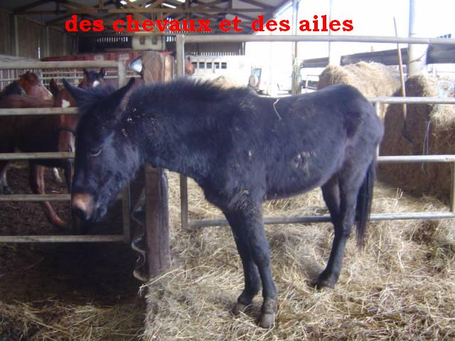 Victor 170 euros !!!  Dsc06010