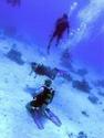 رياضة الغوص بالبحر الاحمر مركز imeidiving 2006_014