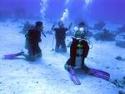 رياضة الغوص بالبحر الاحمر مركز imeidiving 2006_016