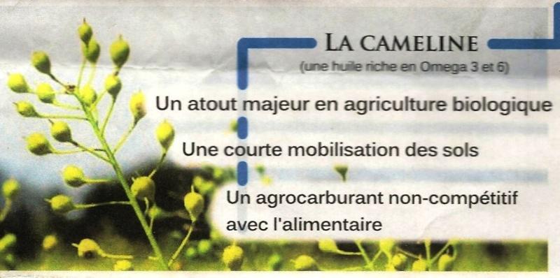 Junas et la caméline La_cam11