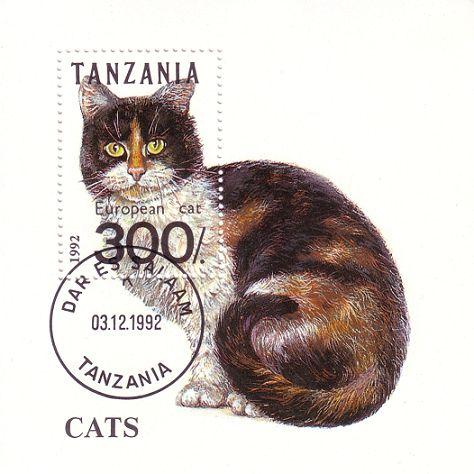 Katzen Pic00073