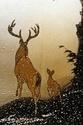 Bambi I , II 18465113