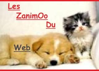Les ZanimOo Du Web