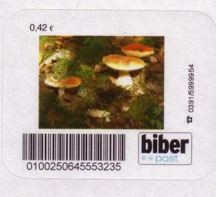 Pilze Biberp14