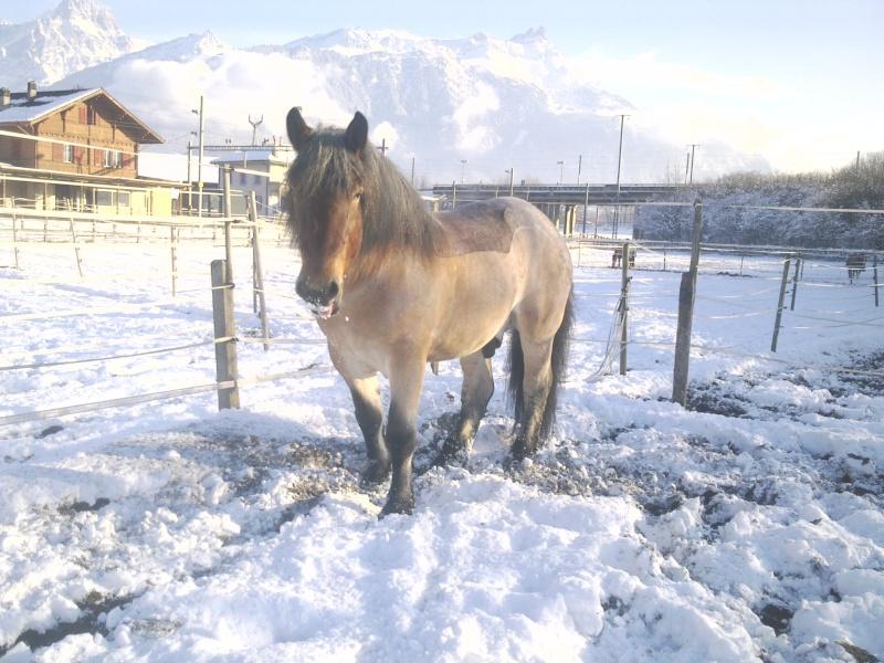 Concours Photos Décembre : Le Cheval et la Neige 02122010