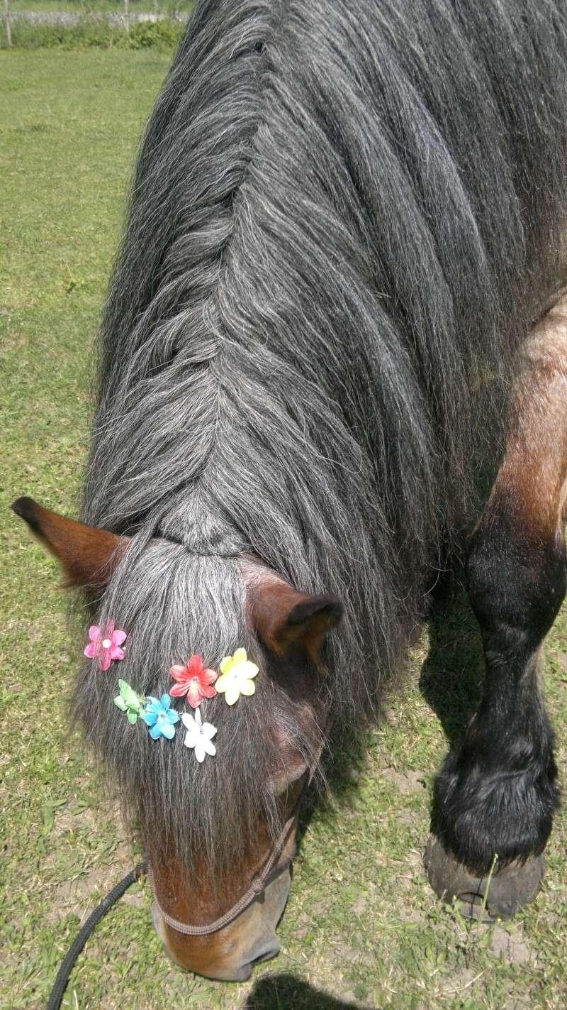 """THEME D 'AOUT 2012 ...""""des chevaux et des fleurs """" - Page 3 18072011"""