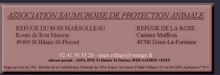 DAGOBERT - cocker spaniel 10 ans - ASPA à  Saumur (49) Saumur10