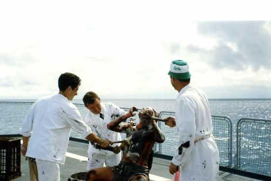 Les traditions dans la Marine Ligne_36