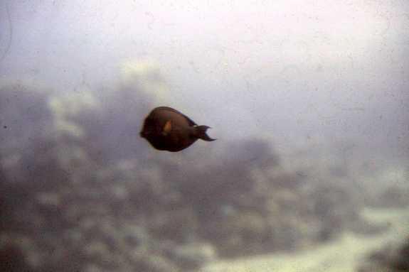 La Mer Rouge vue d'en bas Merrou18