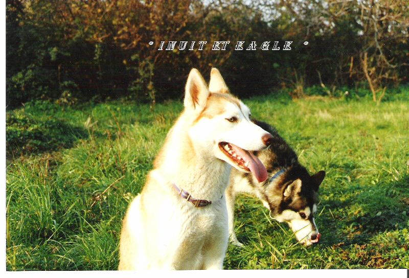 A MES CHIENS . 1_00110