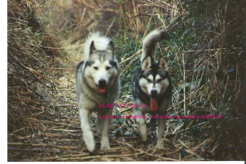 A MES CHIENS . 1_00910