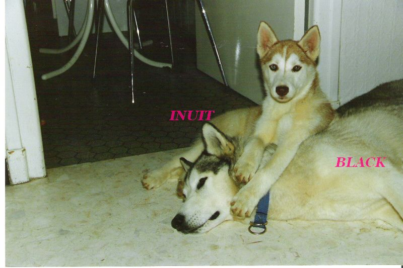 A MES CHIENS . 1_01110