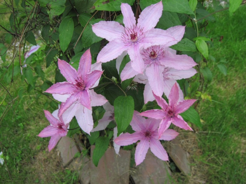 c'est dans mon jardin... 12_06j10