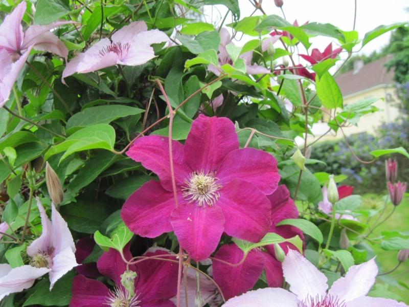 c'est dans mon jardin... 12_06j11