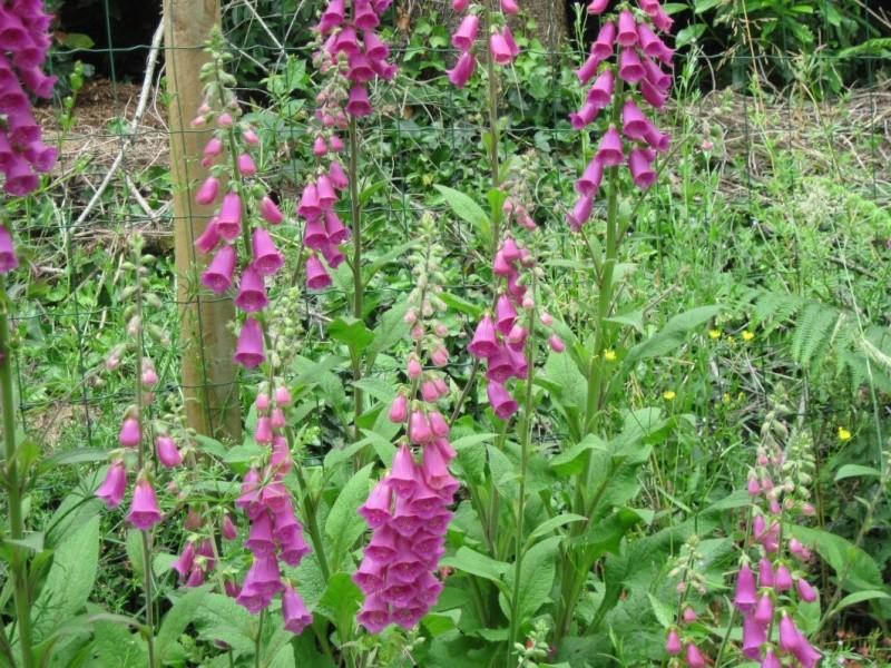 c'est dans mon jardin... 12_06j14