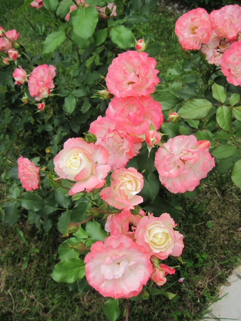 c'est dans mon jardin... 12_06j15