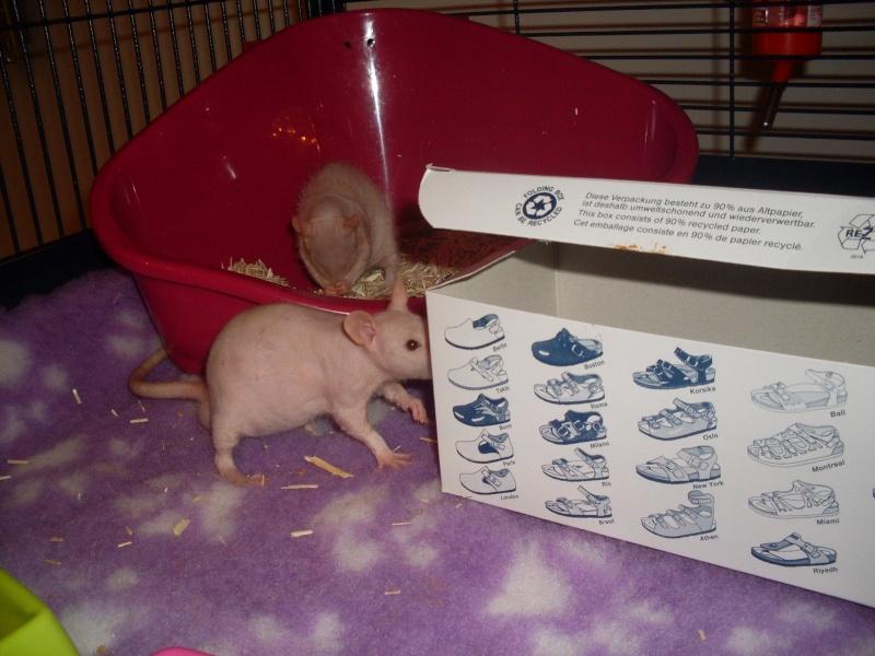 ratons - Page 2 Sdc11132