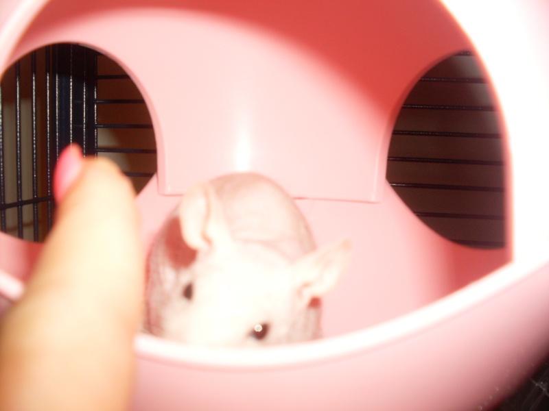 ratons - Page 2 Sdc11139